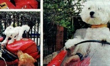Γιώργος Παπαδόπουλος: Έσωσε ένα αδέσποτο σκυλάκι