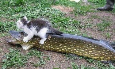 Αρπακτικό ψάρι πέταξε γατάκι μέσα στη λίμνη