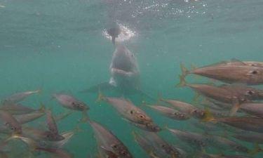 Ανθρωποφάγος καρχαρίας επιτίθεται σε τουρίστες