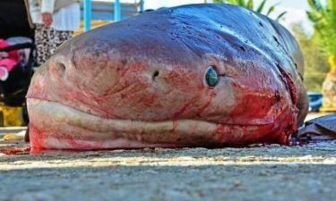 Ψάρεψαν καρχαρία στον Αργολικό κόλπο (photos)