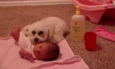 Σκύλος προστατεύει μωρό από... σκούπα!
