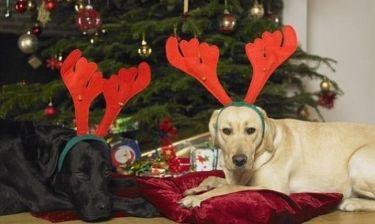 Δώρο από τον Άι Βασίλη σκυλάκι! Ναι ή όχι;