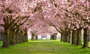 Οι τυχερές και όμορφες στιγμές της ημέρας: Κυριακή 1η Φεβρουαρίου