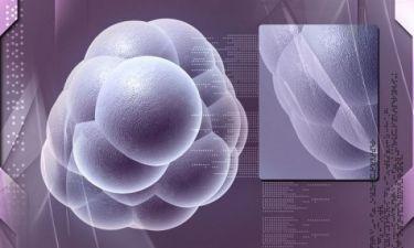 Σκλήρυνση κατά πλάκας: Αναστροφή των συμπτωμάτων χάρη στα βλαστοκύτταρα