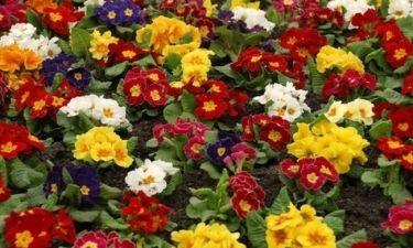 Οι τυχερές και όμορφες στιγμές της ημέρας: Κυριακή 8 Μαρτίου