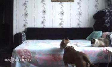 Δείτε τι συμβαίνει όταν ένας σκύλος μένει μόνος στο σπίτι!(βίντεο)