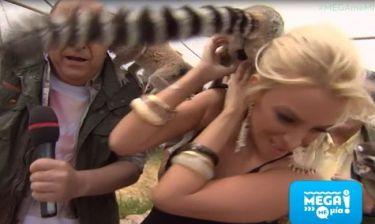 Η Καινούργιου «πάλεψε» με τους λεμούριους στο Mega Με Μία και απομακρύνθηκε...