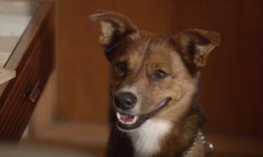 Ο σκύλος που συγκίνησε εκατομμύρια ανθρώπους σε λίγες μόλις ημέρες (βίντεο)