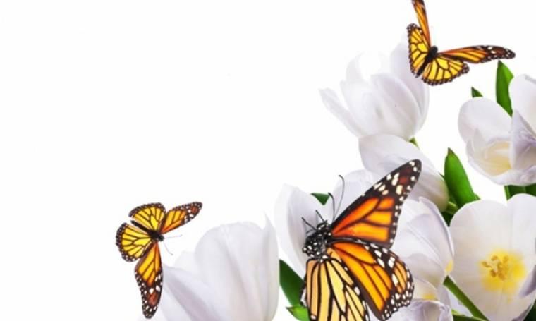 Οι τυχερές και όμορφες στιγμές της ημέρας: Κυριακή 7 Ιουνίου