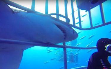 Μεξικό: Σοκαριστική επίθεση λευκού καρχαρία σε δύτες! (video)