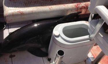 ΗΠΑ: Δελφίνι πήδηξε πάνω σε σκάφος και έσπασε τα πόδια γυναίκας! (video)