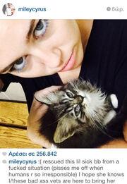 Διάσημη τραγουδίστρια έσωσε αυτό το γατάκι!
