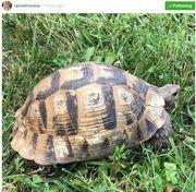 Ράνια Θρασκιά: Δείτε τι βρήκε την ώρα που έκανε τη βόλτα της