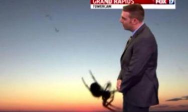 Όταν μία αράχνη διακόπτει τον μετεωρολόγο on air!
