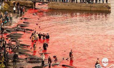 Βιντεο – σοκ: Δείτε πώς σκοτώνουν εκατοντάδες φάλαινες στα Νησιά Φερόες