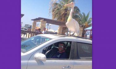 Ο Γιώργος Λιάγκας, το πουλί και η απίστευτη ατάκα του