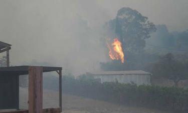 Μεγάλη πυρκαγιά στην Αιτωλοακαρνανία - Απειλούνται σπίτια στην Πάλαιρο (photos)