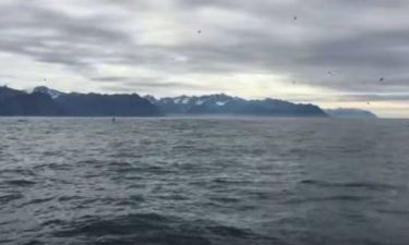 Αλάσκα: Βιντεοσκοπούσε γλάρους - Τίποτα δεν προμήνυε αυτό που θα ακολουθούσε! (video)