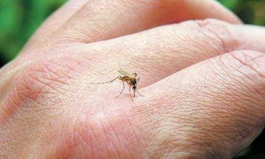 Τσίμπησε κουνούπι εσάς ή το παιδί σας; Δείτε τι πρέπει να κάνετε αμέσως!