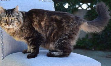 Η γάτα που έσπασε… ρεκόρ. Είναι 26 ετών!