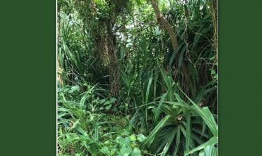 Διέσχισε τη ζούγκλα ο… (φωτό)