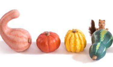 Φθινοπωρινή ισημερία: Η Google τιμά με Doodle την πρώτη ημέρα του Φθινοπώρου