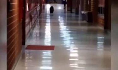 Αρκούδα με... μαθησιακές ανησυχίες εμφανίστηκε σε λύκειο των ΗΠΑ (video)