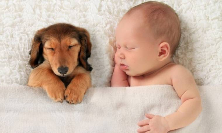 Ο σκύλος προστατεύει τα παιδιά από το άσθμα
