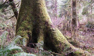 Απίστευτο: Δείτε το έδαφος που «αναπνέει» σε δάσος στον Καναδά (video)
