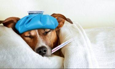 Διατροφή για γρίπη & κρυολόγημα: Δείτε τι πρέπει να αποφύγετε