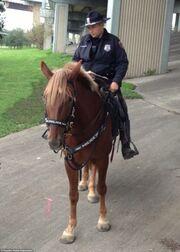 Συγκινητικό! Αστυνομικός θρηνεί για το νεκρό άλογό του