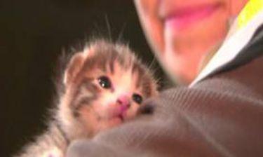 Το γατάκι που έμεινε με... έξι ζωές!