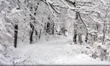 Έρχεται πολικό ψύχος – Θα χιονίσει και στο κέντρο της Αθήνας