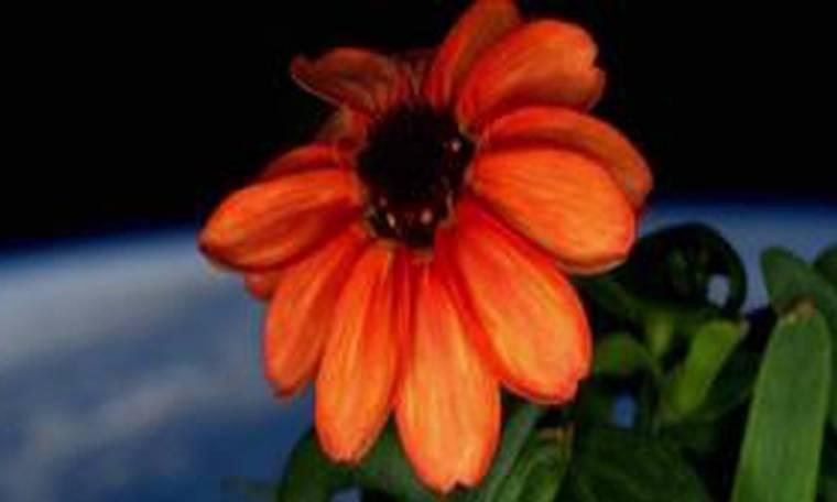 Τα λουλούδια ανθίζουν και στο διάστημα