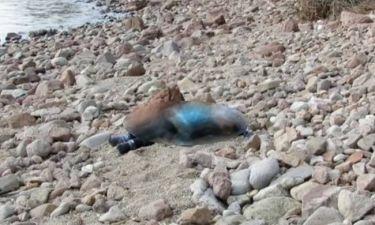 Νέες σοκαριστικές εικόνες από το ναυάγιο στην Τουρκία – Τουλάχιστον 37 οι νεκροί