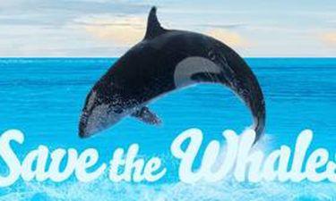 Δες πορνό, σώσε τις φάλαινες
