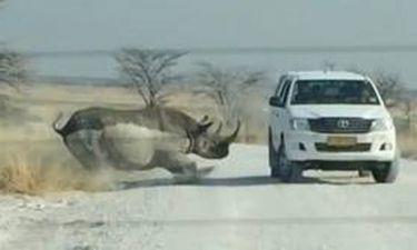 Ρινόκερος σκορπάει τον τρόμο και επιτίθεται σε τζιπ με τουρίστες