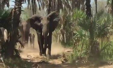 Ελέφαντες πήραν στο κυνήγι Αμερικανό γερουσιαστή και την παρέα του