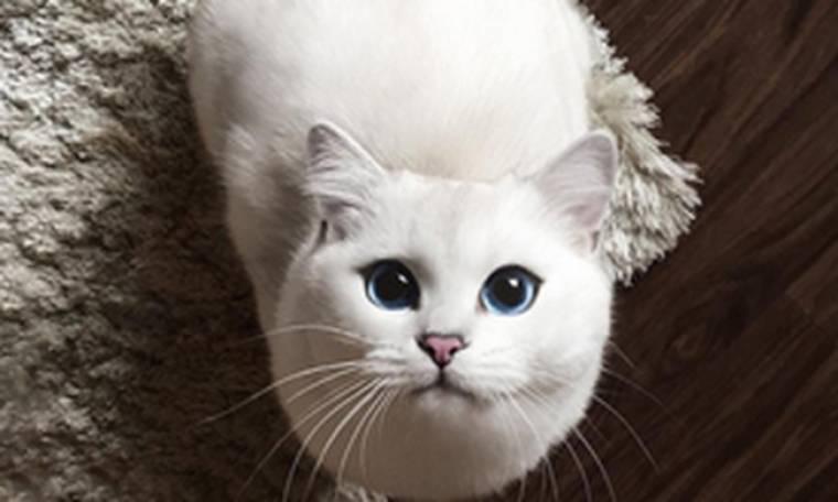 Ένας γάτος με εκατοντάδες χιλιάδες followers