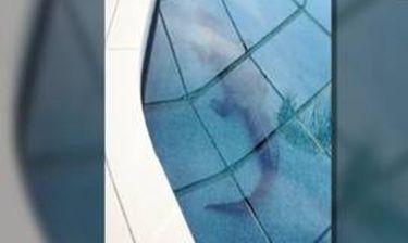 Κροκόδειλος – μπον βιβέρ στην πισίνα έπαυλης