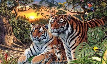 Σπαζοκεφαλιά – εφιάλτης! Εσείς πόσες τίγρεις βλέπετε σε αυτή την αφίσα;