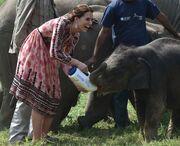Kate Middleton: Δείτε την να ταΐζει ελεφαντάκι με το μπιμπερό