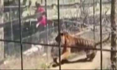 Πήδηξε στο κλουβί με τον τίγρη για να… πιάσει το καπέλο της