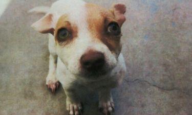 Σκύλος ακολουθεί θεραπεία για απεξάρτηση από την ηρωίνη