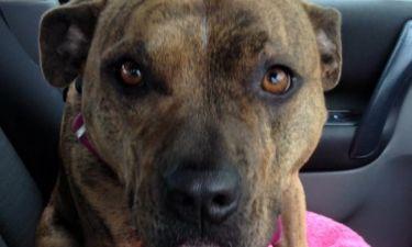 Η σκυλίτσα που αγνόησαν 19.000 υποψήφιοι ιδιοκτήτες (pics)