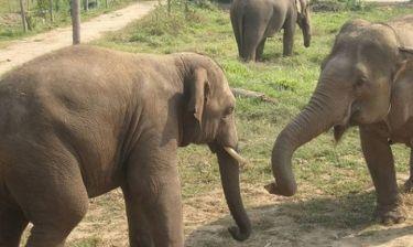 Ο ελέφαντας που μετά από χρόνια βίας βρήκε την ευτυχία