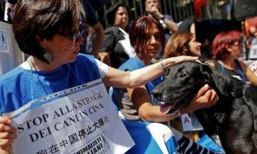 Ακτιβιστές έσωσαν πάνω από 1.000 σκυλιά από σφαγή