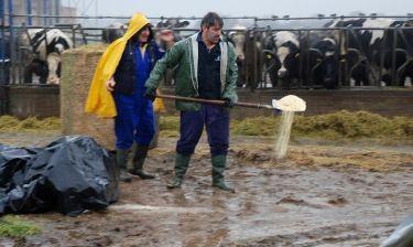 «Ανειδίκευτος εργάτης» σε μια φάρμα αγελάδων