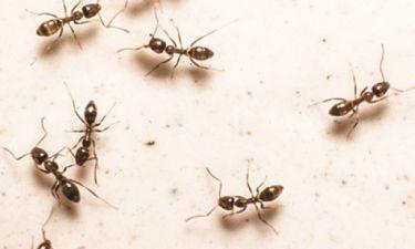 Μυρμήγκια στο σπίτι; Απαλλάξου, μια και καλή, με αυτά τα απλά κόλπα!