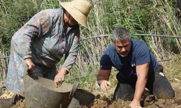 Ο Σπύρος Χαριτάτος δοκιμάζει τις αντοχές του στην περισυλλογή της πατάτας